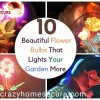 Here are 10 beautiful flower bulbs that lights your garden more and consumes less electriciy you should also try this once.