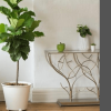 I am sharing the best indoor plants. You can get for your home that will look at your home beautiful, but will also the purify the air in your home.