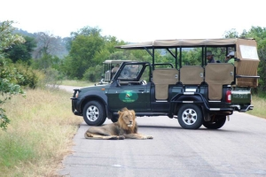 If you are planning a shoestring budget tour to Kruger National Park? Read the answer to f...