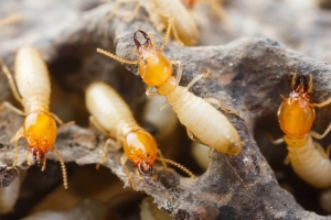 We offer termite control treatment, protection, inspection services & stop termites from c...