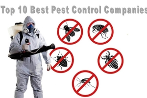 When picking a pest control service, choose a business which provides exceptional services...