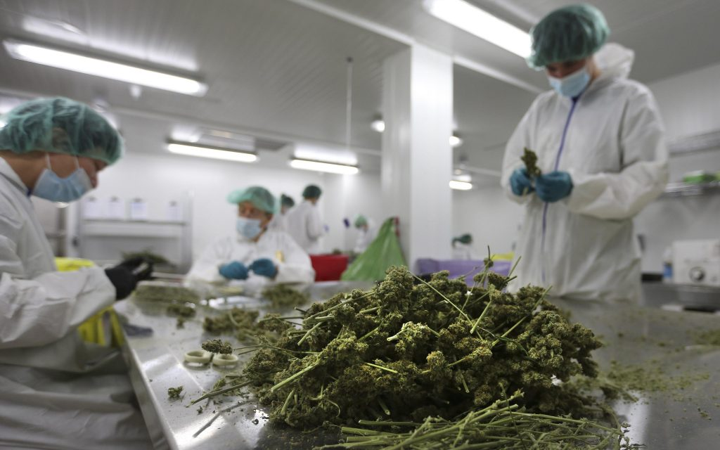 Buy Weed Online in USA at #1 Legit Weed Dispensary Online USA, Medical Weed Strains, Marij...