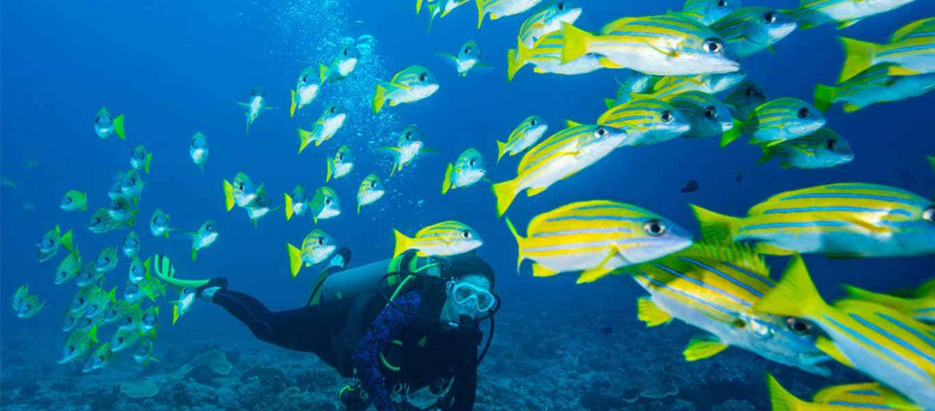 There are many travel agents who can help you get the best experience of scuba diving in G...