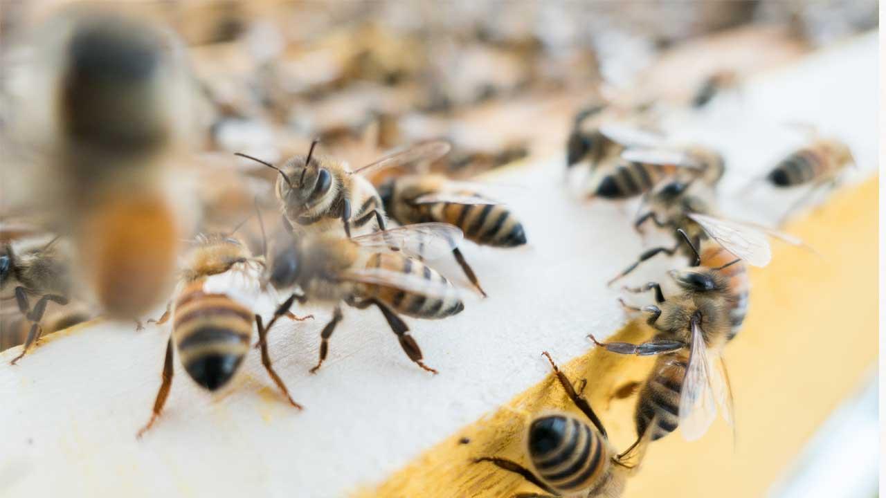 The World Health Organization (WHO) declared the Zika virus a global health emergency, bec...